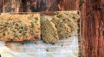 Hidden Seed Loaf